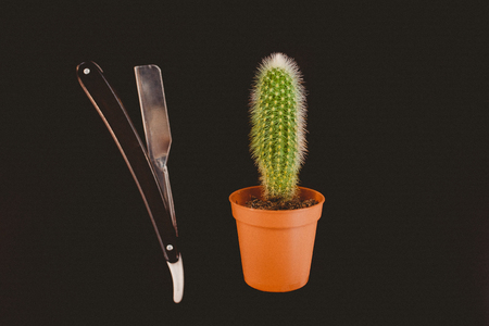 Barber shop. tool razor for beard and cactus. The concept is to shave off a barbed beard
