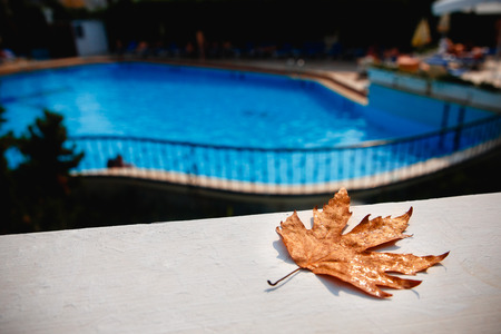 Yellow leaf lies near pool. Concept closing of swimming season, autumn, pool cysts