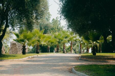 young palm park. Green plants and trees in hot climates. Concept of relaxation in the park of Turkey Фото со стока - 96102696