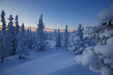 Dawn in winter forest. High-mountain Spruce siberia. winter