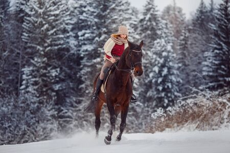 Rider young girl is riding gallop on horse in snow, in background forest. Concept horseback riding