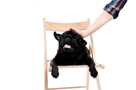 Hand of man stroking dog isolated background. Love for pets pug.
