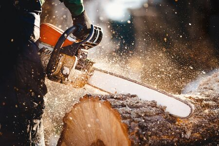 Chainsaw. Woodcutter saws tree with a chainsaw on sawmill Stock Photo