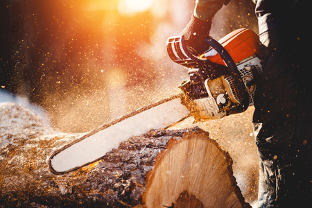 Chainsaw. Close-up of woodcutter sawing chain saw in motion, sawdust fly to sides. Concept is to bring down trees. Banque d'images - 98195897