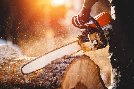 Kettensäge. Nahaufnahme des Holzfällers Kettensäge in Bewegung sägend, Sägemehlfliege zu den Seiten. Das Konzept ist, Bäume zu fällen.