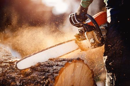 Kettensäge. Kettensäge in der Bewegung, die Holz schneidet. Mann, der Holz mit Säge schneidet. Staub und Bewegungen.