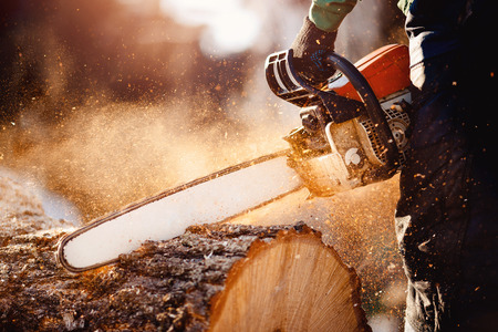 Tronçonneuse. Tronçonneuse en mouvement coupant du bois. Homme coupe du bois avec scie. Poussière et mouvements.