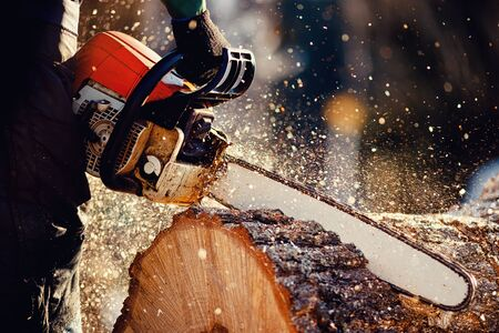 Chainsaw. Woodcutter saws tree with a chainsaw on sawmill 스톡 콘텐츠