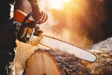 Chainsaw. Close-up of woodcutter sawing chain saw in motion, sawdust fly to sides.