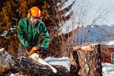Close-up of lumberjack worker with chainsaw in his hands saws fallen tree, chips and dust fly upwards, against blue sky. Protective helmet, headphones. Stock Photo