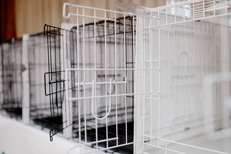 Cages for storing animal dogs, cats in shelters, experiences, shows
