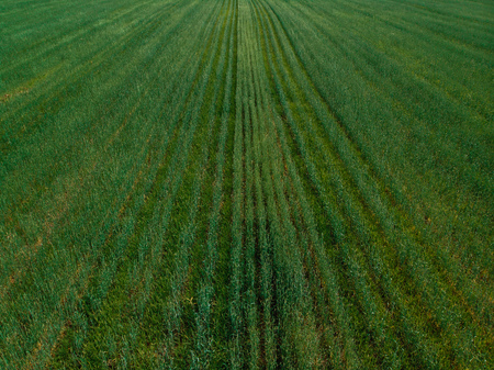 Field in farm is sown with barley, buckwheat, wheat, plowed land for planting crop. Aerial photography, top view.