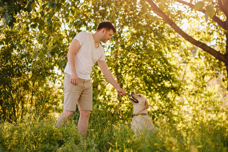 Owner man walks and trains labrador dog in park. Stock Photo