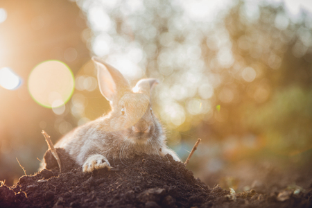 Rabbit hare on backdrop of garden. Sun light. Stock Photo