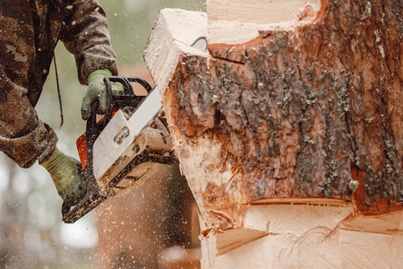 Close-up of woodcutter lumberjack is man chainsaw tree.