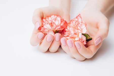Beautiful female hands holding carnations against a white background. Concept ovarian cancer, infertility ovulation.