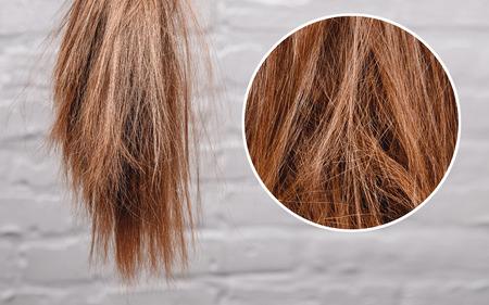 脆い鈍い髪、損傷した根構造女性の灰色の背景。
