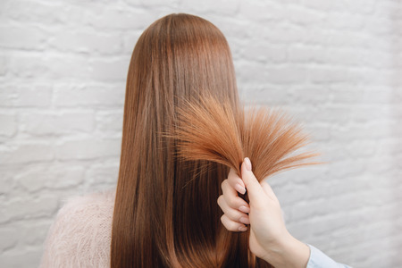Barber holds bunch of women brown hair, demonstration well groomed healthy, no split ends on white brick wall background Imagens