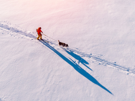 Man on skis walks harness sled dog in winter through snow trail. Concept active leisure. Aerial top view.