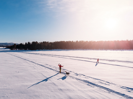Cross country skiing on track with dog malamute. Concept winter holiday. Aerial top view.