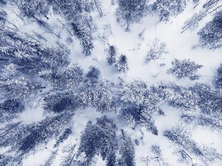 Aerial shot winter frozen spruce forest, blue background . Top view.