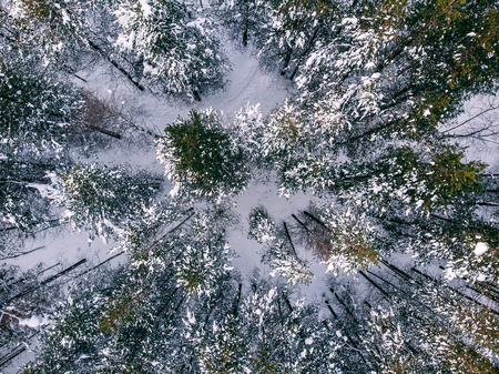 Aerial Photo top view of coniferous forest in winter with snow.