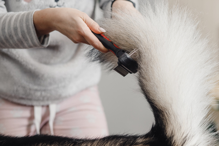 Woman in gray jacket and pink pants combs dog's bushy tail.