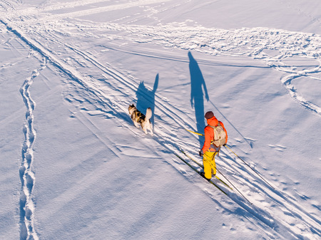 Skijor ski on track with dog malamute. Concept winter holiday. Aerial top view. Stock Photo