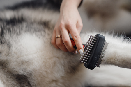In center frame comb with large teeth for grooming animals.
