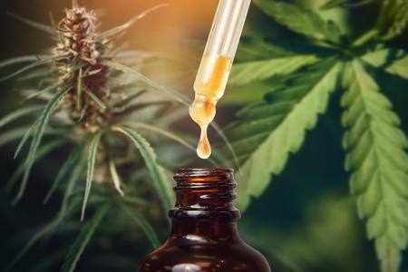 Konzept medizinisches Marihuana. Cannabis-CBD-Öl-Extrakte in Kräuter- und Blättergläsern