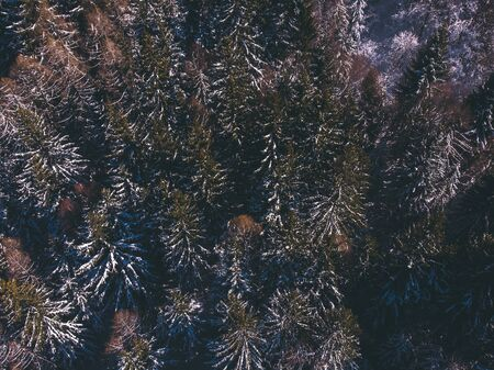 Aerial top view background thick winter spruce forest