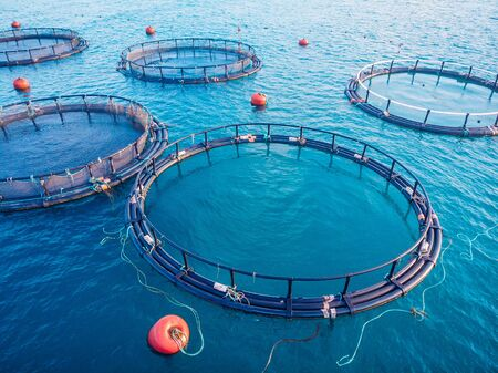 Salmon fish farm aquaculture blue water. Aerial top view 免版税图像