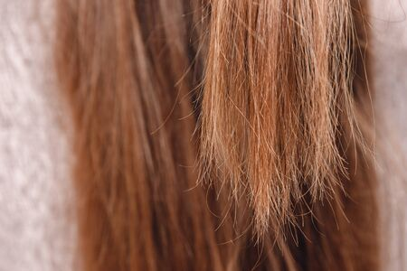 Healthy tips of women dark thick natural hair close up. Post treatment concept