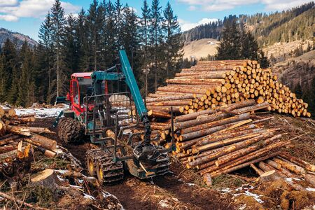 Woodcutter saws tree harvester working in forest