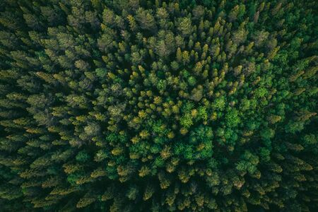 Drone photography summer green trees in forest Finland aerial top view