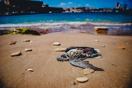 Dead bird on sandy beach against background of sea. Concept zero waste, plastic free.
