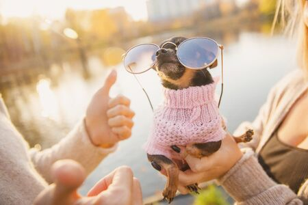 Loving couple holds small terrier dog in round shaped sunglasses, hugging and kissing against backdrop autumn park.