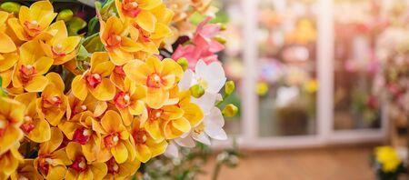 Banner florist shop, closeup luxurious flowers bouquet, in background fridge storage Zdjęcie Seryjne