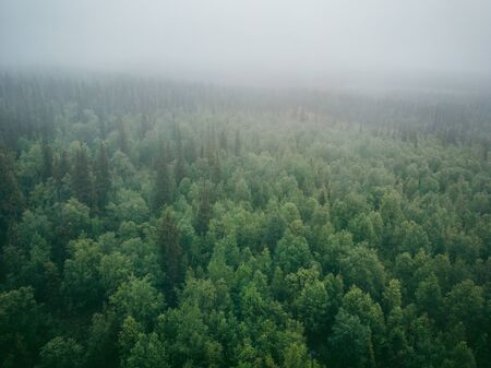 Green forest with mystical fog, dramatic mood. Aerial top view.