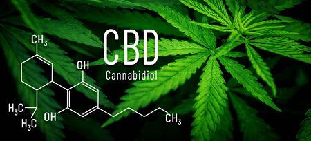 CBD formula cannabis leaf in background banner. Cannabinol medical macro flower marijuana. 스톡 콘텐츠