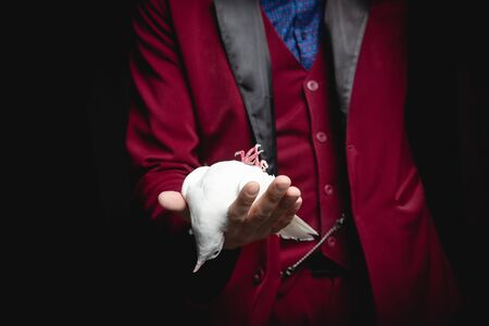 Magician man shows trick with trained white dove bird Stock fotó