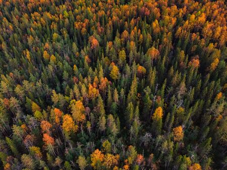 Aerial view beautiful autumn colorful forest with yellow and red trees.