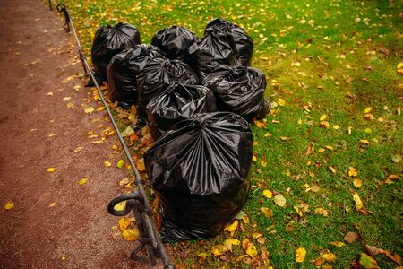 Biodegradable garbage bags for collecting fallen autumn leaves.