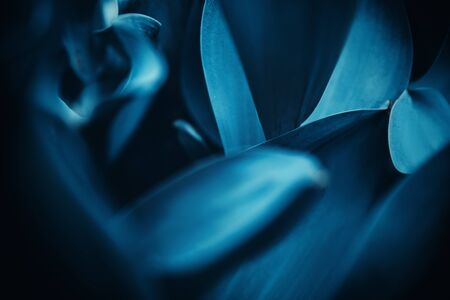 Cyan blue background abstract flora natural from flowers, macro photo