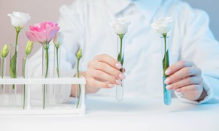 Natural cosmetics flower extract, oil from plants and leaves. Biotechnologist doctor in white uniform holds flags in hands.