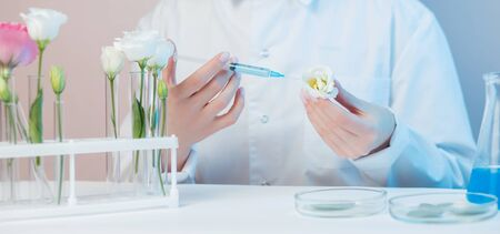 Scientist extracts oil syringe from flowers test natural cosmetics extract aroma. Buds leaf in glass flask. Biotechnology concept.