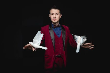 Magician man shows trick with trained two white dove on black background