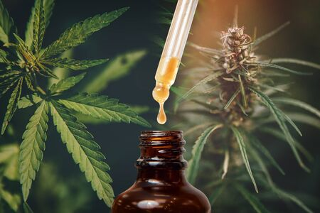 Cannabis CBD TNC oil extracts in jars herb and leaves. Concept medical marijuana Stock fotó