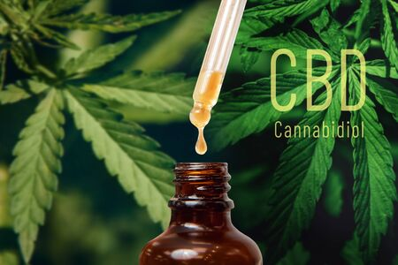 Cannabis CBD TNC oil extracts in jars herb and leaves. Concept medical marijuana.