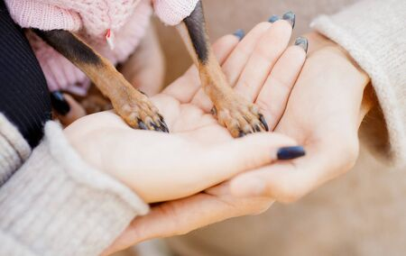 Legs of dwarf dog in hands couple in love. Childfree Concept.